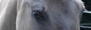 Reiten und Pferdeflüstern