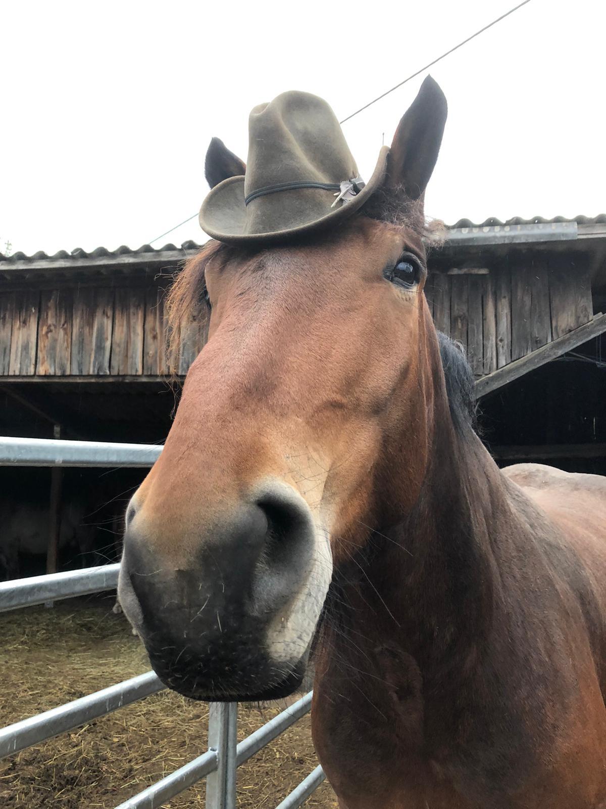 Nero, so groß mit Hut